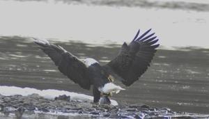 VRnews eagle3