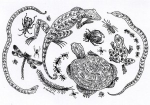 Critter Drawing #1 by Peggy Madden