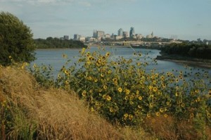 Kaw Point sunflowers - Photo taken at Kaw Point Park in Kansas City, Kansas.  I believe this photo was taken in September.